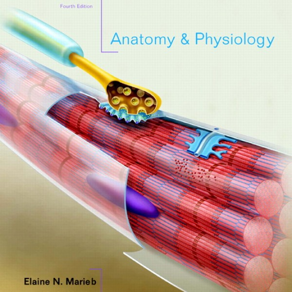 Test Bank for Anatomy And Physiology 4/E by Marieb