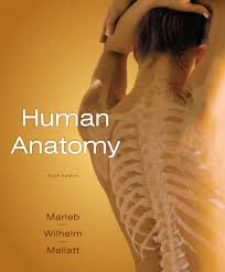 Test Bank 6th Marieb Anatomy Edition Mallatt Human Wilhelm